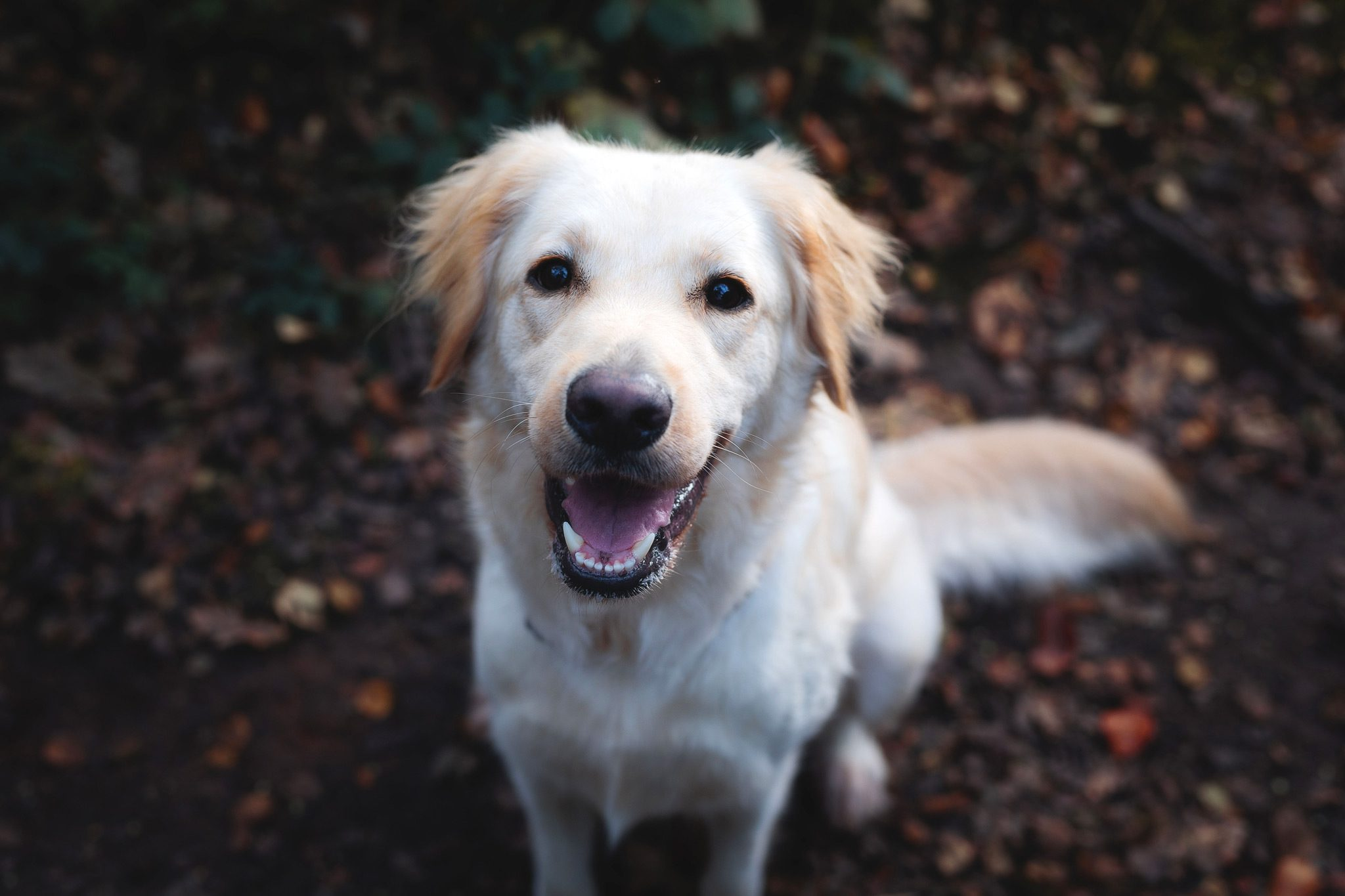 Pet Photography in Derbyshire