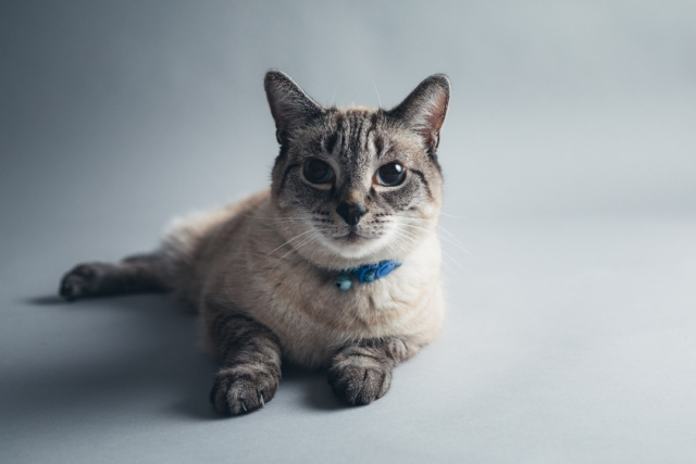 Pet Photography in Cheshire